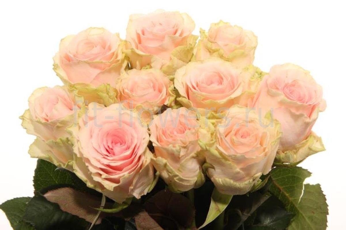 Роза в Колбе-Официальный сайт-Подарок-Действуют скидки