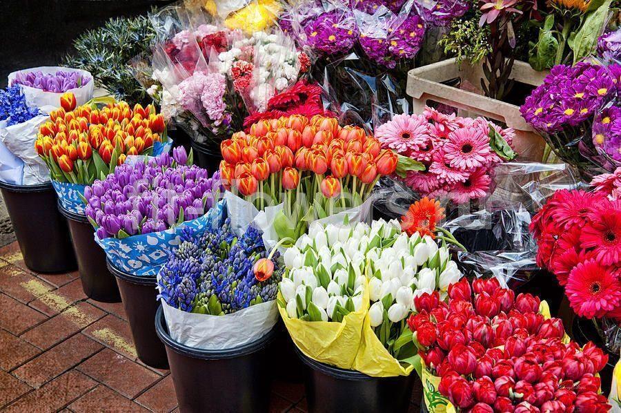 Купить цветы дешево в спб оптом